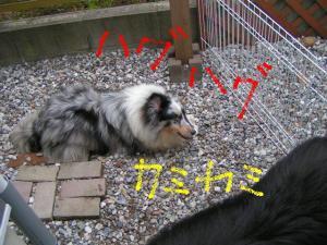 PICT20060526a.jpg