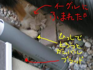 PICT20060526c.jpg