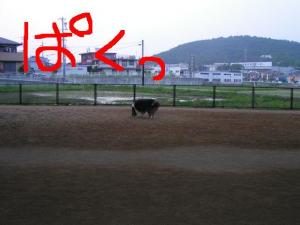 PICT20060606a.jpg