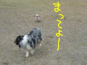 PICT20060612c.jpg