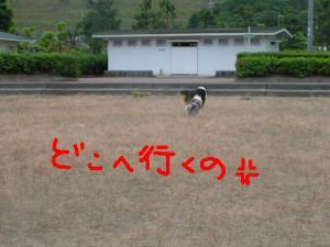 PICT20060612d.jpg