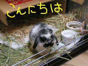 PICT20060619a.jpg