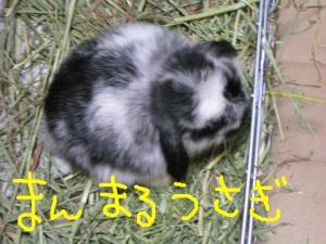 PICT20060619c.jpg