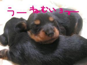 PICT20060716d.jpg