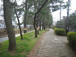 東海道の並木道
