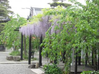 葛井寺(2)
