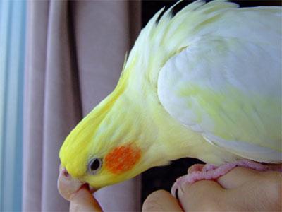 piro20080827-4.jpg