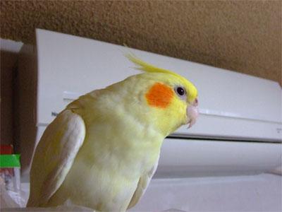 piro20080829-1.jpg