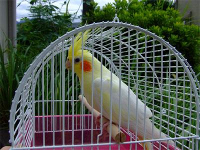 piro20080830-3.jpg