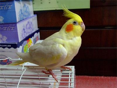 piro20080830-4.jpg