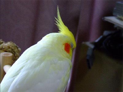 piro20080831-6.jpg