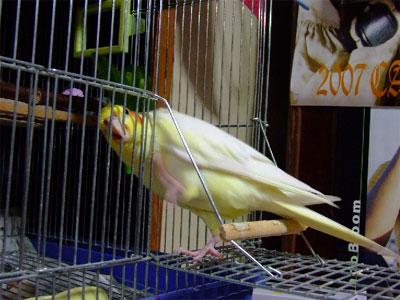piro20080922-2.jpg