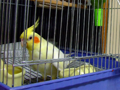 piro20080922-3.jpg