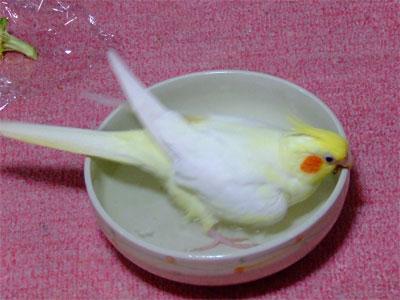 piro20080922-4.jpg