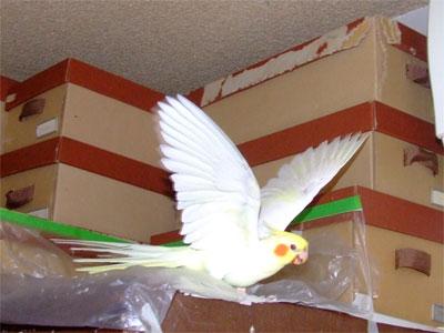 piro20080923-1.jpg