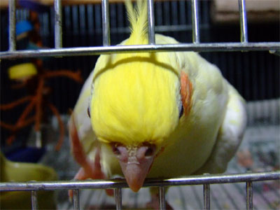 piro20080923-6.jpg