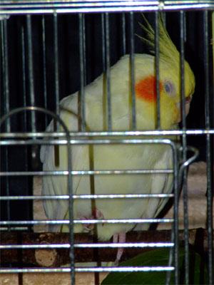 piro20080925-4.jpg