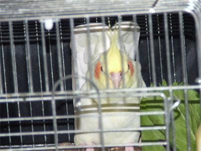 piro20080927-6.jpg