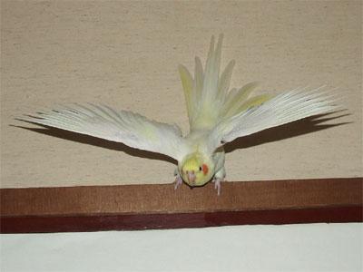 piro20080927-7.jpg