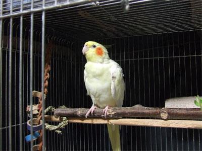 piro20080929-4.jpg
