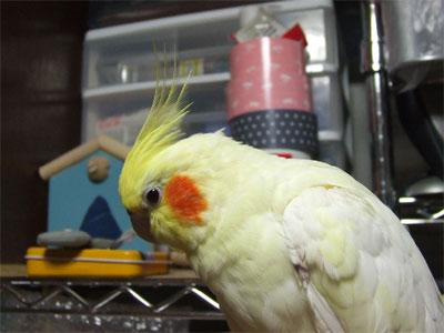 piro20080930-2.jpg