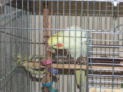 piro20080930-4.jpg
