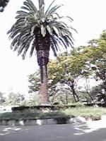 うつぼ公園①