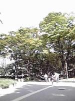 うつぼ公園②