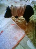 柚子4ヶ月