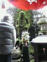 法善寺コケ仏像