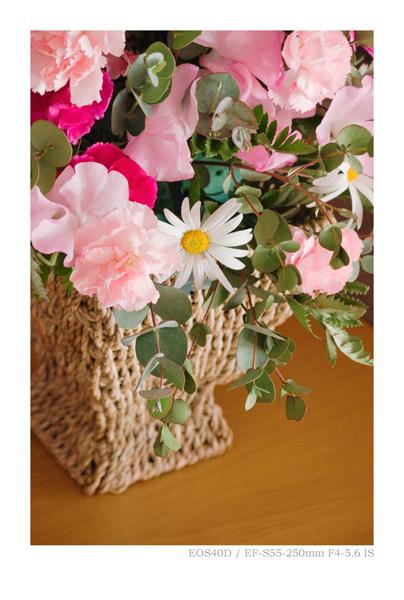 EOS40Dで撮影した花の写真