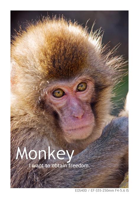 キャノンEOS40Dで撮影した猿の写真