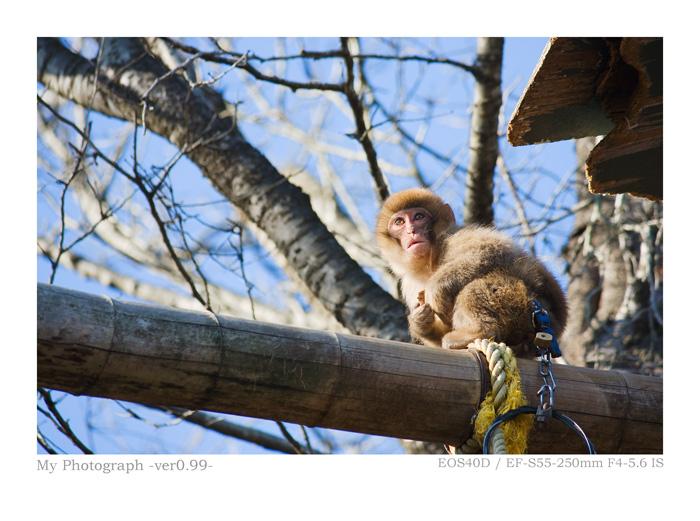 EOS40Dで撮影した猿の写真