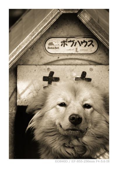 キャノンデジタル一眼レフカメラ EOS40Dで撮影した犬の写真