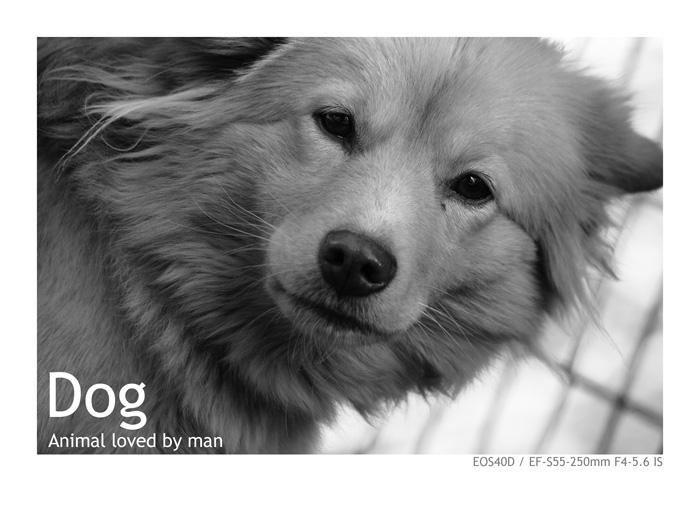 EOS40Dで撮影した犬の写真