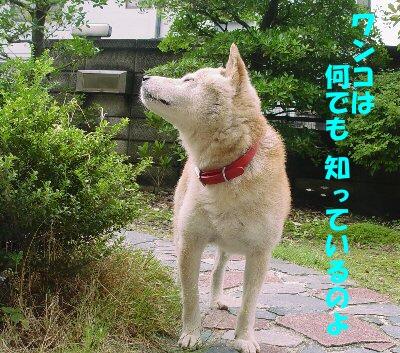 20060711091516.jpg