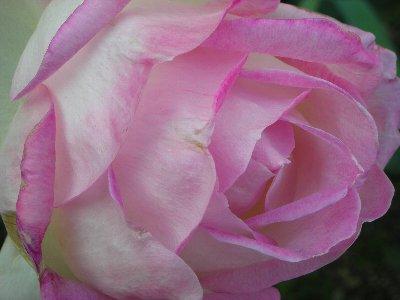 薔薇館 3