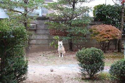 niwaoki 1