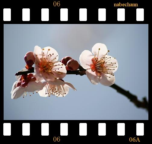 IMG_8152b.jpg