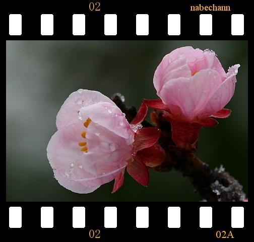 IMG_8270a.jpg
