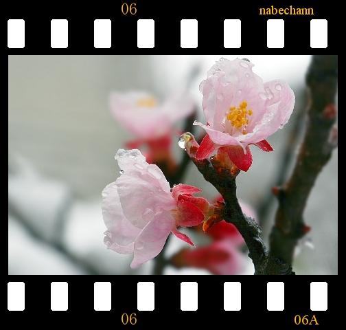 IMG_8304a.jpg