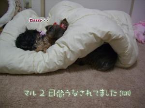 S字睡眠(≧з≦)プー