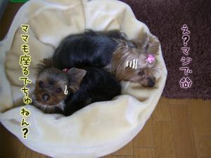 かわいぃ~(*`∇´*)