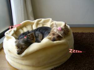 おやすみ♪(´ε` )