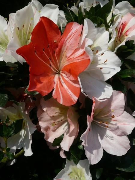 yumemonogatari_20090603230508.jpg