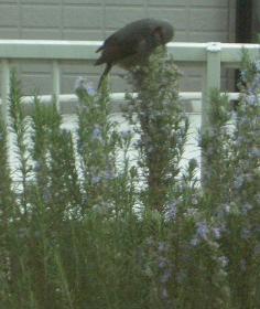 遊びに来た小鳥1
