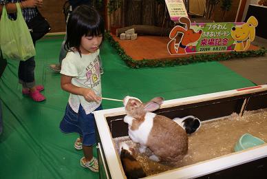 ウサギのエサやり