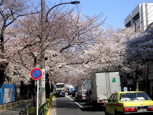 nakanodorisakura1.jpg