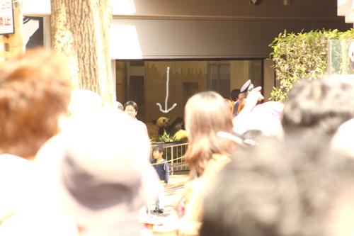 panda9.jpg