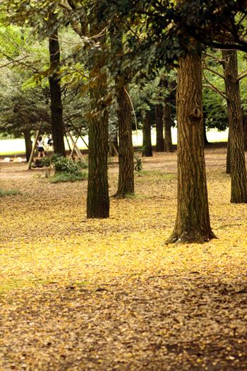 yoyoyogipark2.jpg